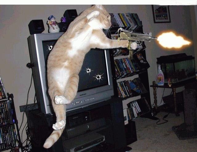 Exposition de minoux meow meow Pp7l7kpc